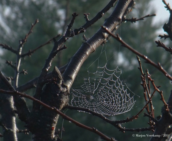 spider web with raindrops.cr2